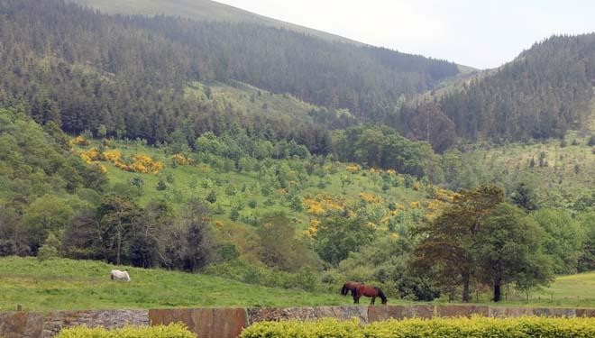 Só o 10% do monte galego ten plans de ordenación, obrigatorios desde o 2020
