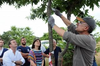 Medio Rural reforzará a loita biolóxica contra o chancro do castiñeiro