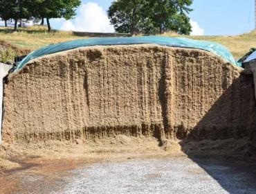 ¿Como incide a dixestibilidade da fibra das forraxes na produción de leite?
