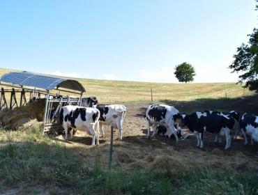 O Ministerio propón primar as pequenas explotacións lácteas no reparto das axudas europeas