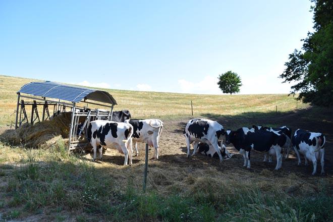 El Ministerio propone primar a las pequeñas explotaciones lácteas en el reparto de las ayudas europeas