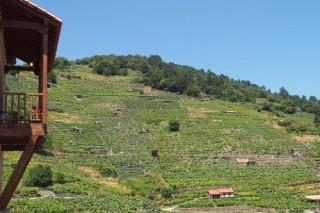 Vía Romana: o viño que non entende de présas