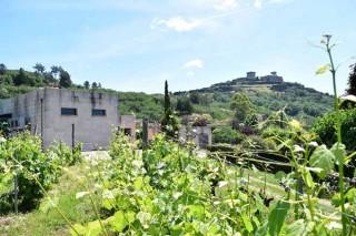 Adegas beneficiadas das axudas para plantación de viñedo e para promoción do viño