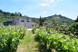 Terra do Gargalo: a busca da excelencia no viño