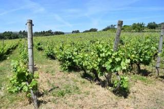 Roubos a viticultores e adegueiros da DO Monterrei