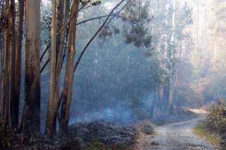 Monte queimado arredor de Diáns.