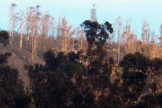 No alto do monte, eucaliptos calcinados. Na zona baixa, coas copas intactas.