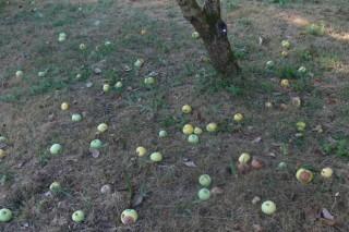 Boletín de avisos fitosanitarios en viñedo y manzanos