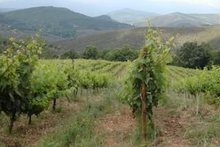 """""""O viño fano a natureza, a cepa e o lugar. A nós tócanos non equivocarnos"""""""