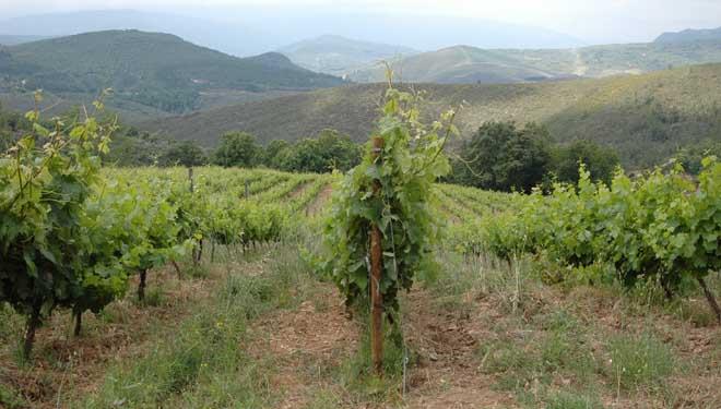 """""""El vino lo hacen la naturaleza, la cepa y el lugar. A nosotros nos toca no equivocarnos"""""""