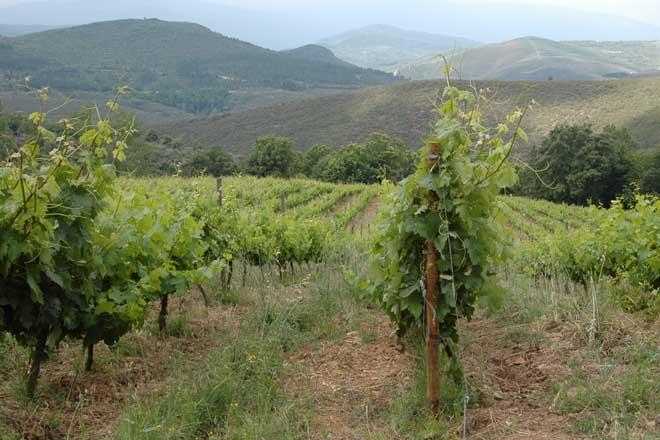 Listado de beneficiarios das axudas para reestruturación e reconversión do viñedo