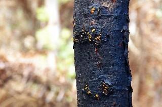A madeira queimada segue bloqueada no monte cinco meses despois dos lumes