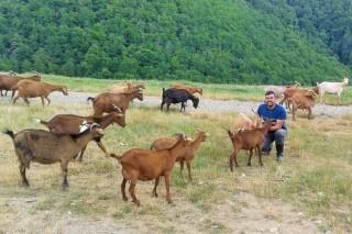 De Barcelona a Samos para ser ganadero de cabra y oveja gallegas