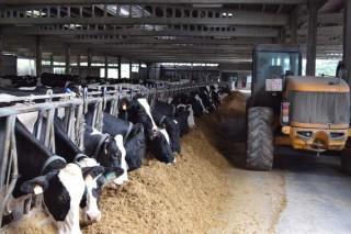 Cinco liñas de innovación nas granxas de vacún de leite