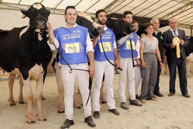 Concurso y subasta de ganado frisón el próximo fin de semana en Lalín