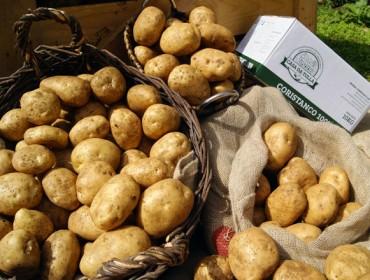 """""""La Patata de Coristanco tiene gran salida en el mercado, pero hay que garantizar su origen"""""""