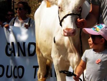 Agromuralla pide menos impostos dos concellos para as ganderías