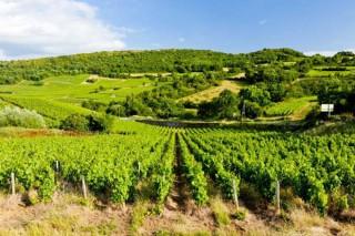 """""""O futuro dos viños de Borgoña é ser referencia mundial en sustentabilidade"""""""