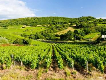 Que viños estranxeiros compran os españois?
