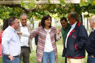 """A IXP  """"Viños Ribeiras do Morrazo"""" xa conta con recoñecemento en España"""