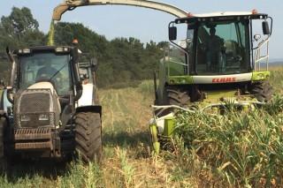 Cobideza inicia o ensilado do millo en Galicia