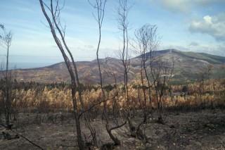 Os montes de Porto do Son afectados polo lume encaran a súa recuperación