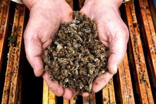 Asefoga inicia un programa de formación en apicultura orientado a zonas de Rede Natura