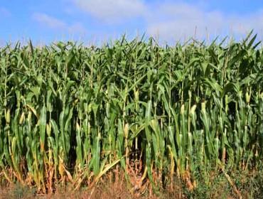 Medio Rural anuncia unha unidade para fomentar o movemento de terras