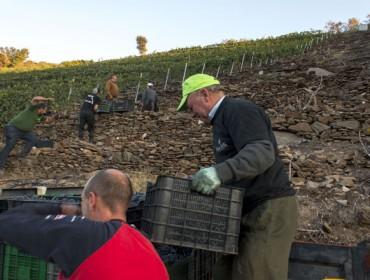 ¿Como axudar no campo sen ser sancionado pola Inspección de Traballo?