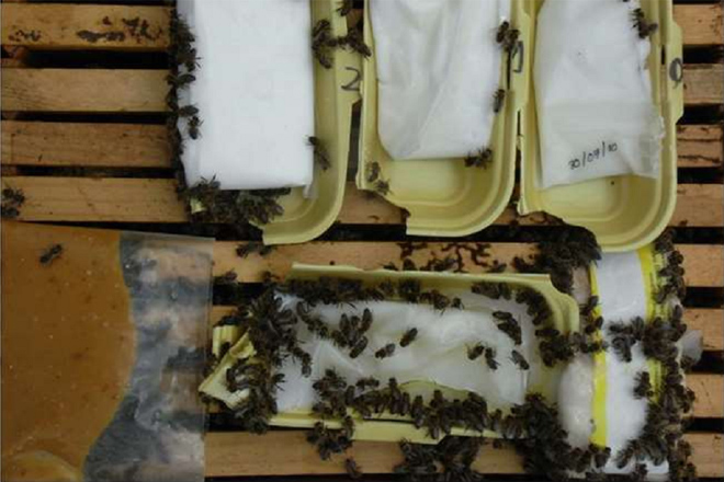 Consellos de preparación de pensos para as abellas