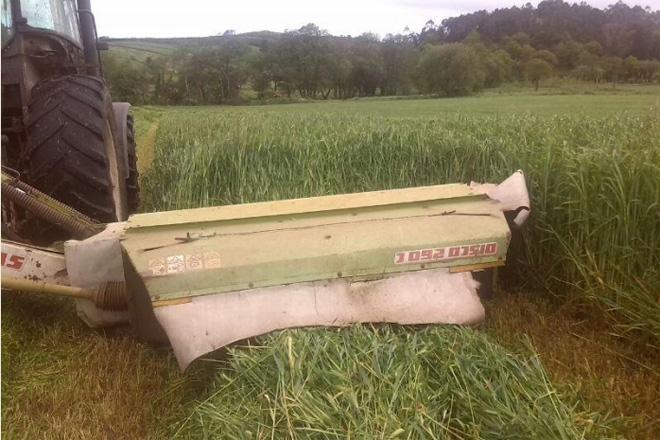 Cultivos forraxeiros alternativos ao raigrass