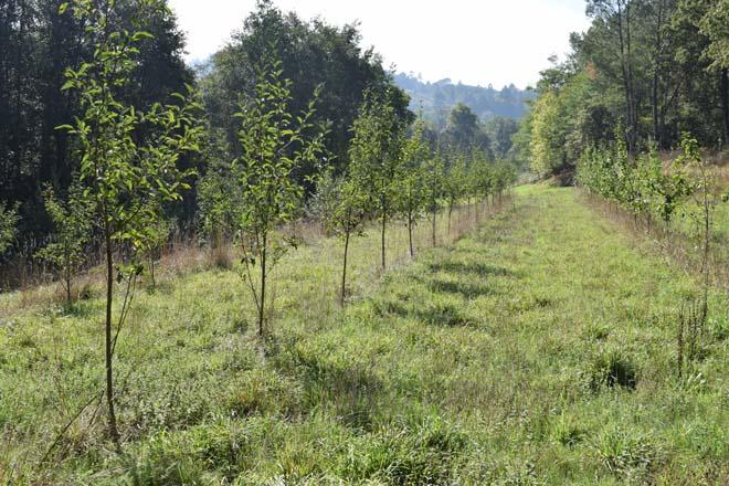 Recomendan tratar as árbores danadas polos temporais
