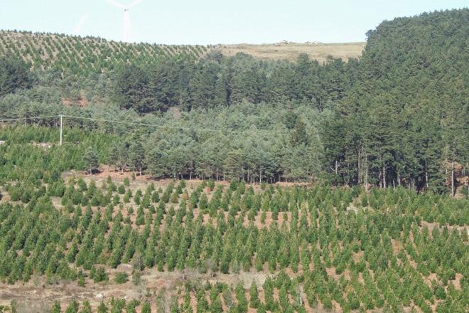 Convocadas as axudas para elaborar instrumentos de ordenación ou xestión forestal