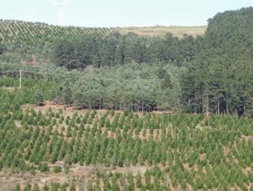 """Xosé Alfredo Pereira: """"La revisión del plan forestal supone privatizar los montes vecinales"""""""