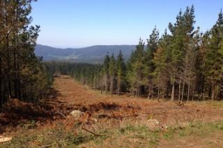 Convocadas as axudas para proxectos de ordenación de montes