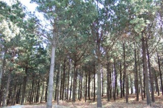 Curso de inventarios forestais e cubicación de madeira