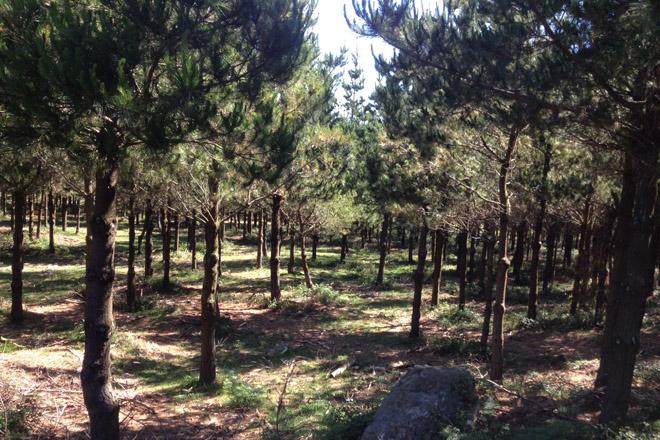 Formación sobre geolocalización de parcelas forestales y medición de troncos