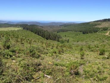 Medra un 35% a superficie forestal xestionada pola Xunta con certificado PEFC