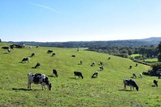 Tercer mes consecutivo de aumento de las entregas de leche