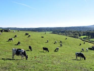 Terceiro mes consecutivo de aumento das entregas de leite