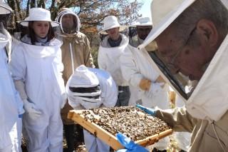 """""""Precisamos novos apicultores que sexan profesionais para que non lles morran as colmeas"""""""