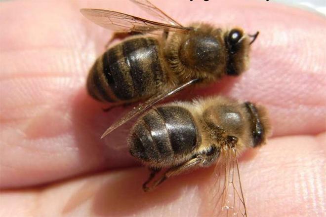 La importancia del polen en la alimentación de las abejas