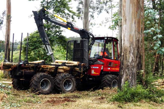 Os prezos do piñeiro mantéñense estables e fréase a baixada do eucalipto