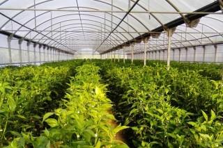 Abono orgánico en la huerta, ventajas y buenas prácticas