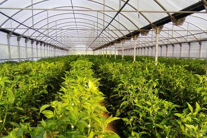 Abono orgánico na horta, vantaxes e boas prácticas