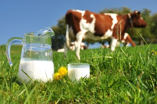 Lixeiro descenso do prezo do leite en xuño até os 0,327 euros o litro