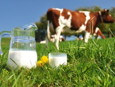 Prevén que o prezo do leite se manteña nunha media de 0,32 € litro nos próximos años