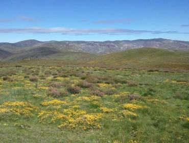 Medio Rural prevé ayudas en el 2018 para deslindes de montes vecinales