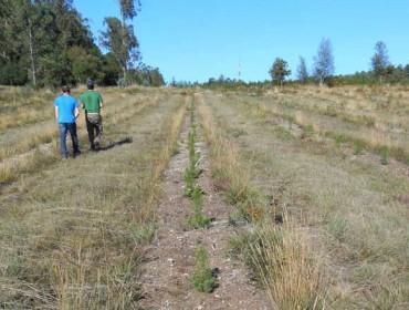 Xornada sobre o programa de mellora silvícola do piñeiro en Galicia