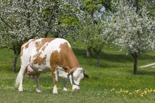 Viaje para conocer ganaderías en ecológico en Austria y la raza Fleckvieh